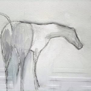 study horse